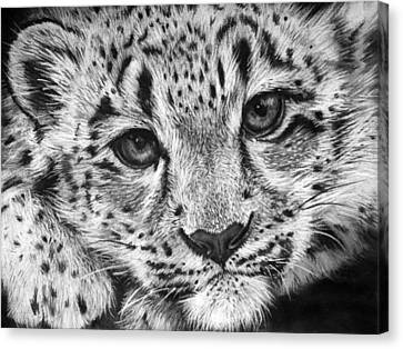 Baby Snow Leopard Canvas Print by Sharlena Wood