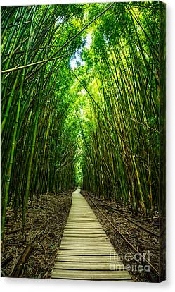 Bamboo Forest Canvas Print by Jamie Pham