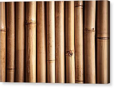 Bamboo  Canvas Print by Modern Art Prints