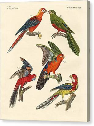 Beautiful Parrots Canvas Print by Splendid Art Prints