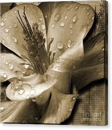 Beauty II Canvas Print by Yanni Theodorou