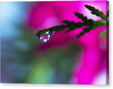 Beauty Within Canvas Print by Dana Moyer