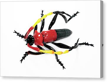 Beetle Canvas Print by Tomasz Litwin