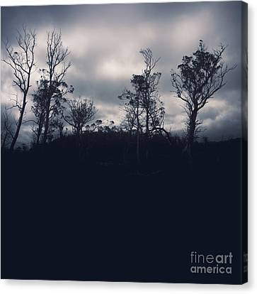 Black Silhouette Trees In Spooky Tasmanian Forest Canvas Print by Jorgo Photography - Wall Art Gallery