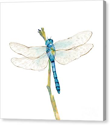Blue Dragonfly Canvas Print by Amy Kirkpatrick