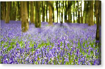 Bluebell Wood Canvas Print by Jane Rix