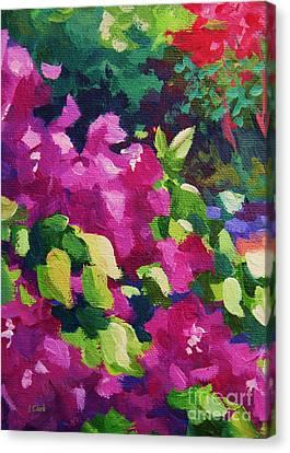Bougainvillea  Canvas Print by John Clark