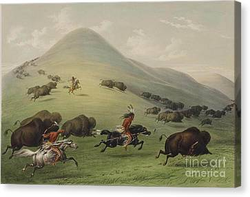 Buffalo Hunt Canvas Print by Celestial Images