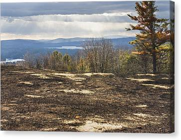 Burnt Blueberry Field In Maine Canvas Print by Keith Webber Jr