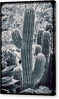 Cactus Land Canvas Print by Kelley King