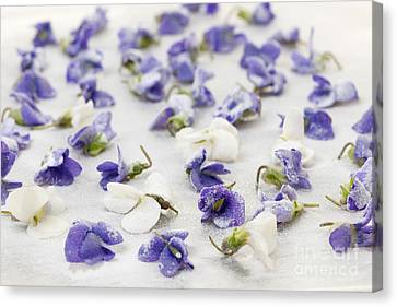 Candied Violets Canvas Print by Elena Elisseeva