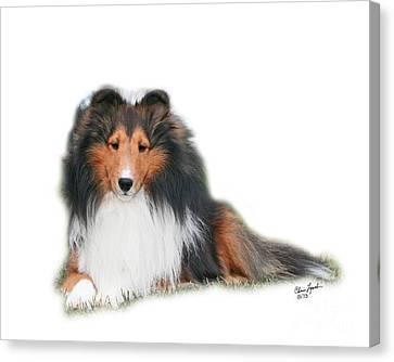Ch Dury Voe Scottsdale Canvas Print by Chris Lynch