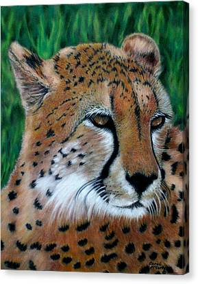 Cheetah Canvas Print by Carol McCarty