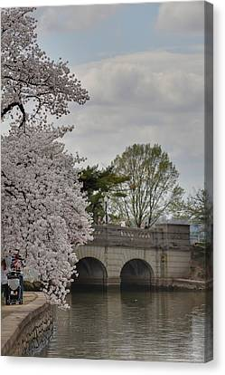 Cherry Blossoms - Washington Dc - 011328 Canvas Print by DC Photographer