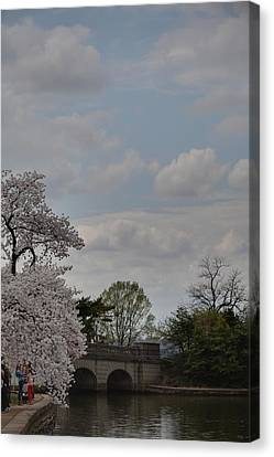 Cherry Blossoms - Washington Dc - 011331 Canvas Print by DC Photographer
