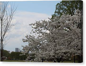 Cherry Blossoms - Washington Dc - 011345 Canvas Print by DC Photographer