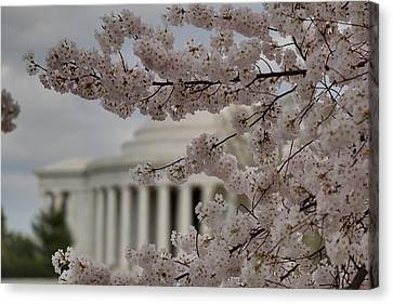 Cherry Blossoms With Jefferson Memorial - Washington Dc - 01134 Canvas Print by DC Photographer