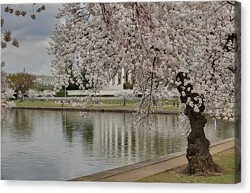 Cherry Blossoms With Jefferson Memorial - Washington Dc - 01135 Canvas Print by DC Photographer