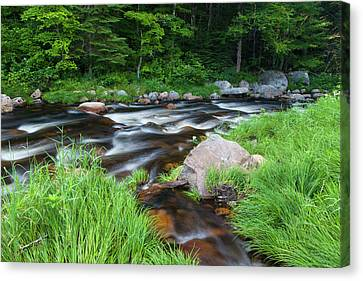 Cold Stream In Maine's Northern Forest Canvas Print by Jerry and Marcy Monkman