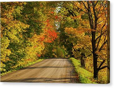 Country Road In Autumn  West Bolton Canvas Print by David Chapman