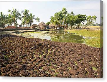 Cow Dung Belonging To Subsistence Farmers Canvas Print by Ashley Cooper
