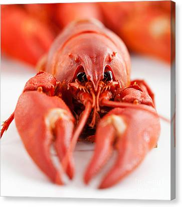 Crawfish Canvas Print by Kati Molin
