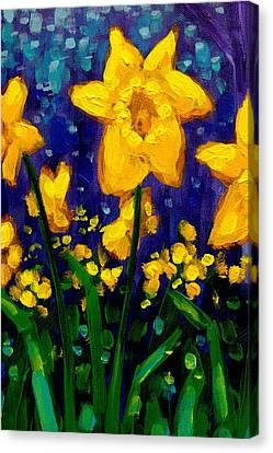 Dancing Daffodils Cropped  Canvas Print by John  Nolan