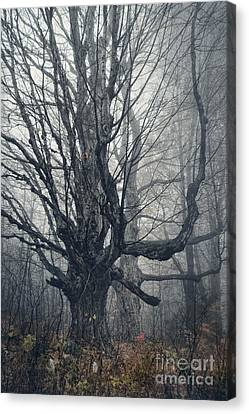 Dark Forest Canvas Print by HD Connelly