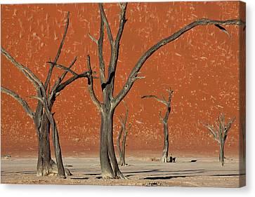 Dead Trees In Dry Clay Pan, Dead Vlei Canvas Print by Peter Adams