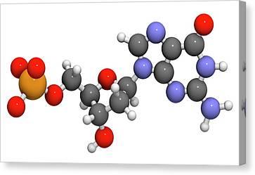 Deoxyguanosine Monophosphate Molecule Canvas Print by Molekuul