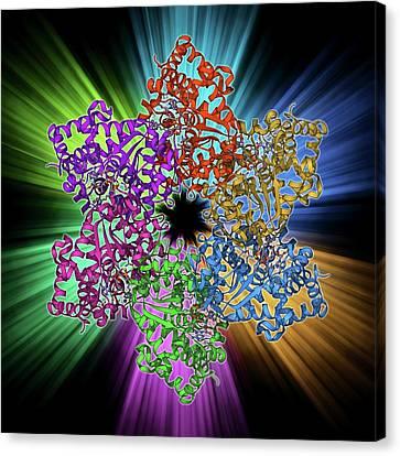 Dna Helicase Molecule Canvas Print by Laguna Design
