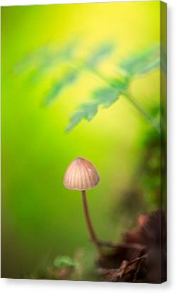 Dream Mushroom Canvas Print by Dirk Ercken