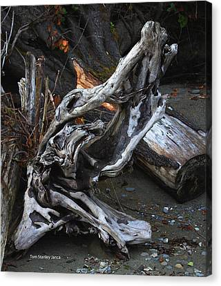 Driftwood On The Beach Canvas Print by Tom Janca