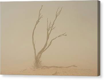 Dust Storm In The Auob Riverbed Canvas Print by Tony Camacho
