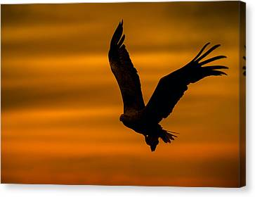 Eagle Silhouette Canvas Print by Andy Astbury