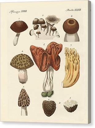 Eatable Mushrooms Canvas Print by Splendid Art Prints