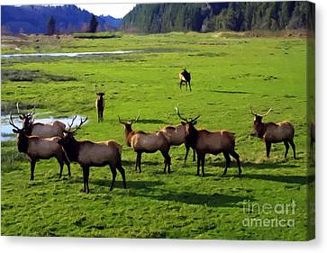 Elk Or Wapiti Canvas Print by Larry Stolle