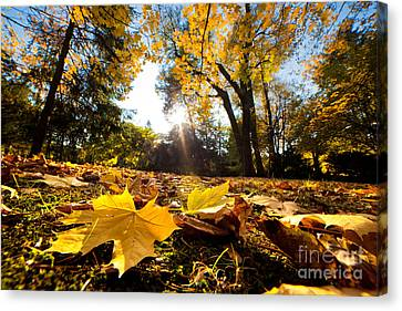 Fall Autumn Park. Falling Leaves Canvas Print by Michal Bednarek