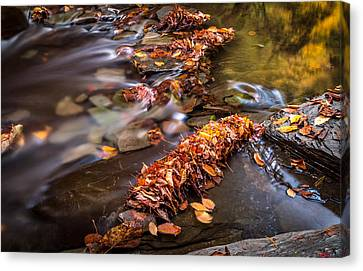 Fall Leaves Canvas Print by Gary Fossaceca