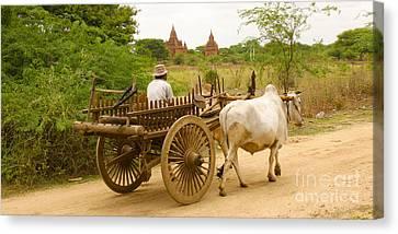 Farmer Driving An Ox Cart Old Bagan Burma Canvas Print by Ralph A  Ledergerber-Photography