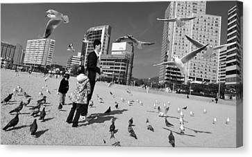 Feed The Birds Canvas Print by Roy Cruz