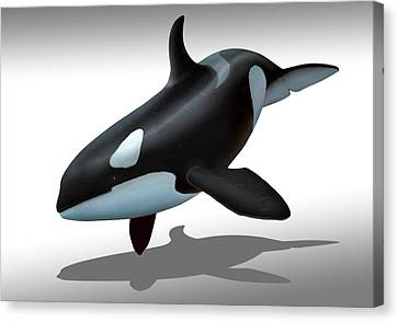 Female Killer Whale Canvas Print by Mark Garlick