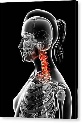 Female Neck Bones Canvas Print by Sebastian Kaulitzki