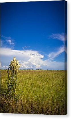 Florida Flat Land Canvas Print by Marvin Spates