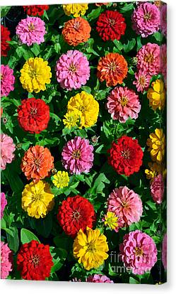 Flowers Exhibition Canvas Print by George Atsametakis