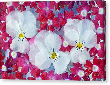 Flowers Canvas Print by John Shaw