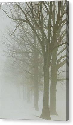 Fog Canvas Print by Karin Thue