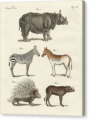 Four-footed Animals Canvas Print by Friedrich Justin Bertuch
