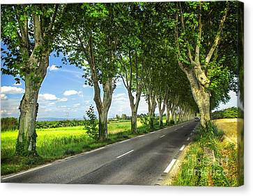 French Country Road Canvas Print by Elena Elisseeva