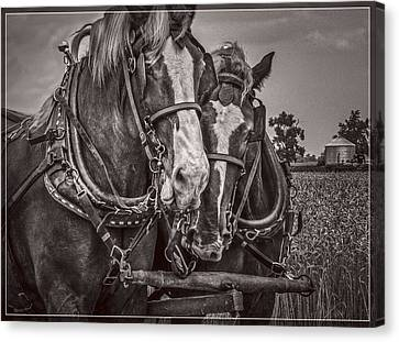 Friends - Black And White Canvas Print by F Leblanc
